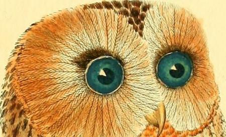 webzine,bd,zébra,fanzine,gratuit,bande-dessinée,actualité,revue,presse,hebdomadaire,février,2018,tintin,hergé,bob garcia,wallez,diable,bon dieu,georges rémi,catholique,tintoret,philippe val,coq,bruyères,charlie-hebdo,agathe andré,patrick font,biodiversity heritage library,françois martinet,flickr,chouette