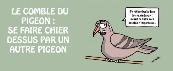 webzine,bd,zébra,gratuit,fanzine,bande-dessinée,gag,naumasq,humour,pigeon